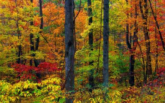 гряда, blue, mountains, virginia, лес, осень,