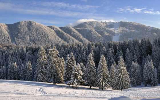 winter, лес