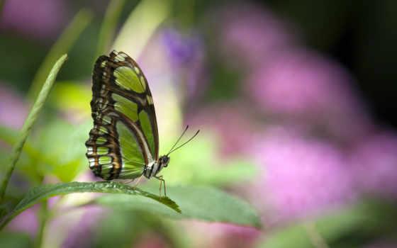 бабочки, бабочка, яndex, зелёный, смартфонов, levshin, зелёная,