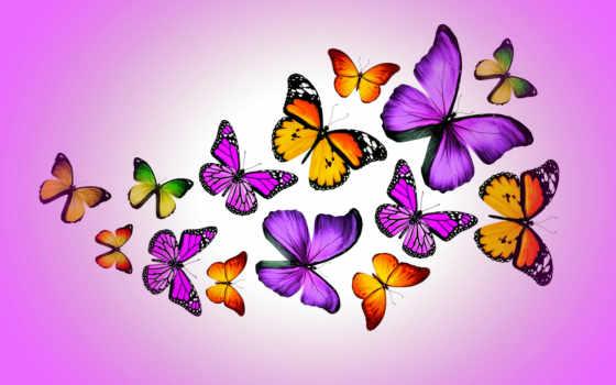 бабочка, розовый, фон, картинка