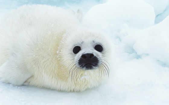 seal, free