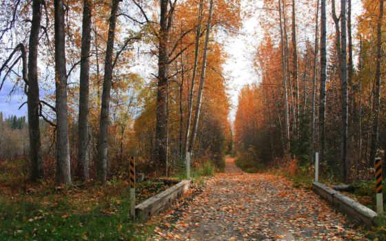 осень, листья Фон № 31627 разрешение 1920x1080