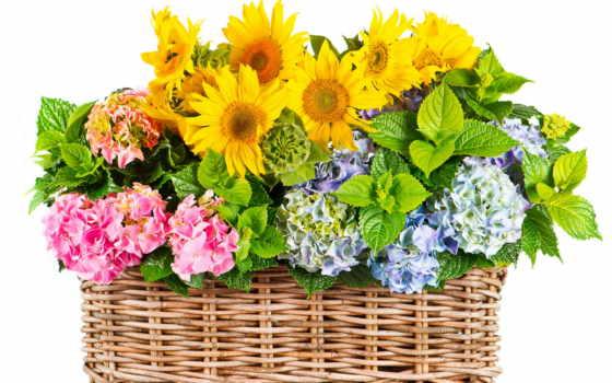 flowers, мб, гортензия