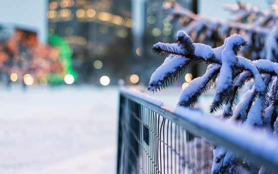 зимние, забор, макро,