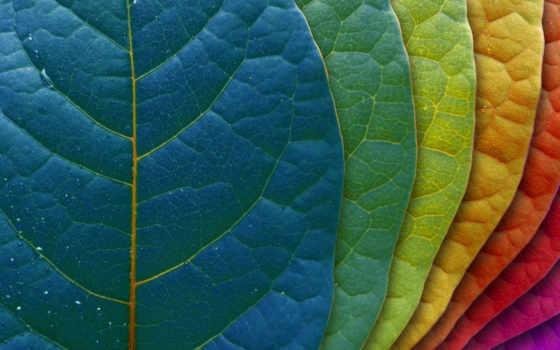листья, лист, макро