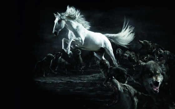 лошадь, волки, разное