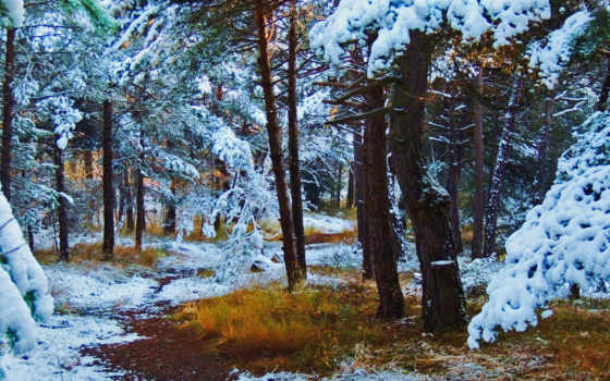 лес, bosques, mind,