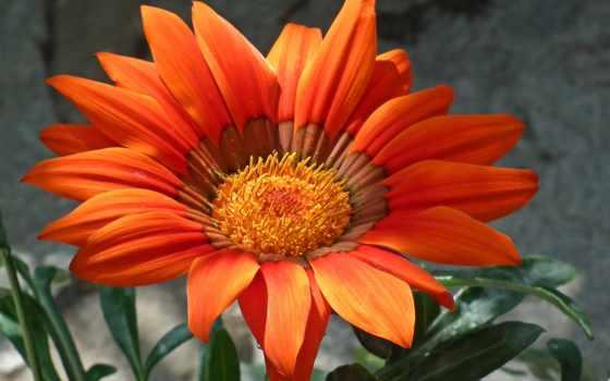 flores, con, imagenes, imágenes, lindas, amor, movimiento, para, frases, descripción,