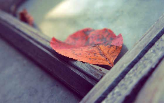 leaf, red, photos, stock, планшетный,