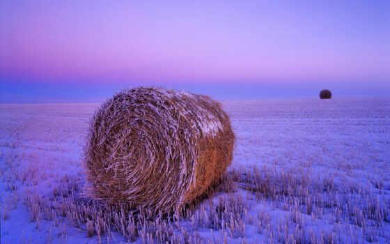 поле, сено, коллекция, card, стог, заснеженный, мари, пшеница, закат