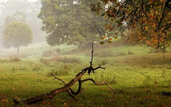 туман, осень, коряга