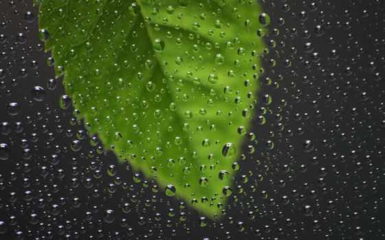 макро, очарование, влажность, дождь, воздуха,