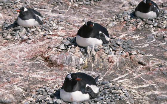 пингвины, котики, морские