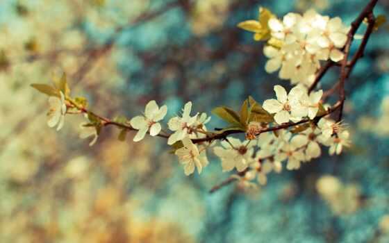 весна, цветы, листья