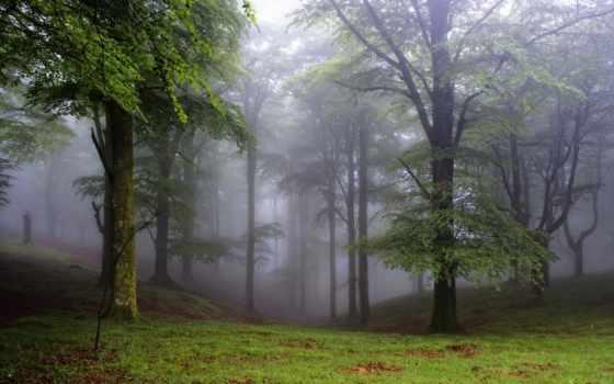 лес, деревья, поляна