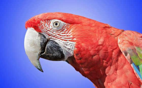 попугаи, совершенно, категория