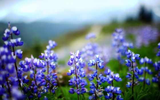 цветы, листья, растение