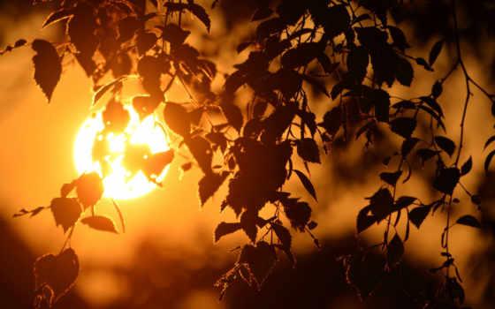 закат, береза, sun