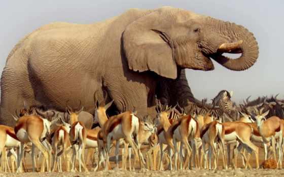 африка, jungle, tvkultura, документалистик, afrika, esk, анонсы, everything, официальном, конго, televize,