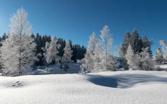 иней, winter, снег, лес, trees, небо, синее,