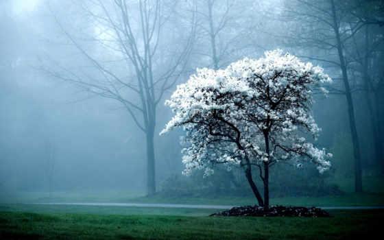 туман, природа, garden, park, cool, images, desktop,