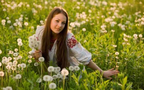 devushki, девушка, красивые, поле, ромашками, девушек, украинском, сидит,