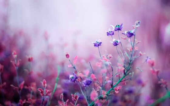 цветы, поле, весна, природа, she, makryi, картинка