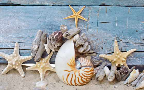 starfish, ракушки, морские