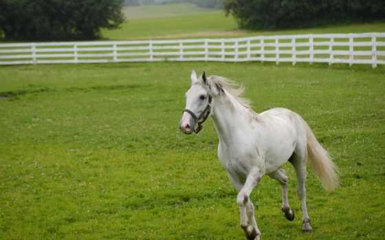 лошади, веке, has