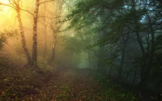 лес, сказочный, уже