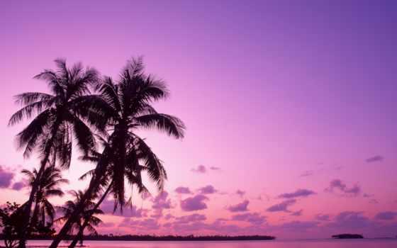 roxo, parede, silveira, papel, papéis, que, praia, море, água,