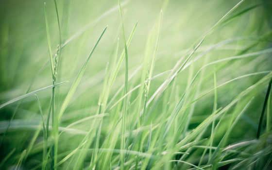 макро, зелёный, свет, трава, качестве, природа, растения, хорошем, rays,