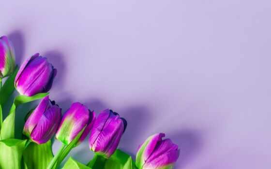 цветы, purple, искусственный, букет, тюльпан, свет, красивый