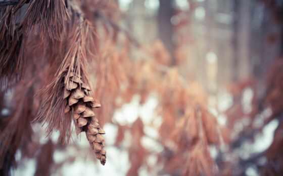 канада, pembroke, leaf, объектив, онтарио, природа, winter, холод, blurry, осень, ёль