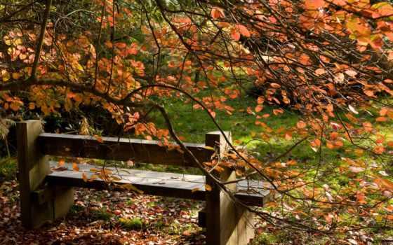 природа, осень Фон № 33521 разрешение 2560x1600