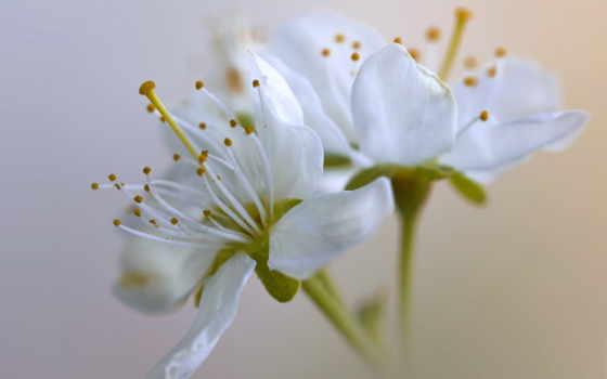 flowers, blossom, spring