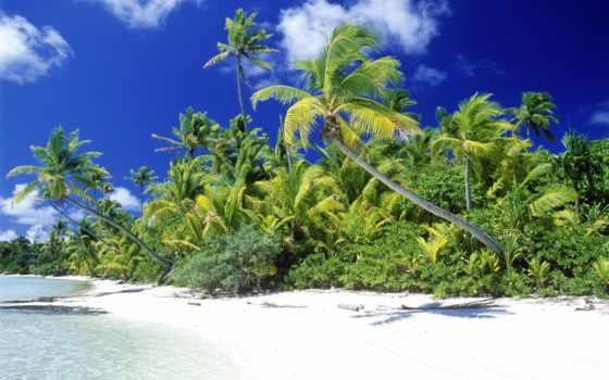 пляж, пальмы, море, ocean, красивые, заставки, прогулка, tropics, tourism,