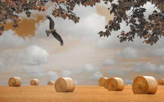поле, осень, сено, ветки, перепелятник, landscape, природа,