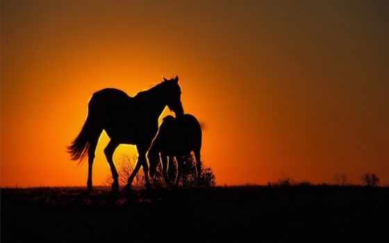 paarden, solitary, reaper, pinterest, об, blacksmith, images, февр,