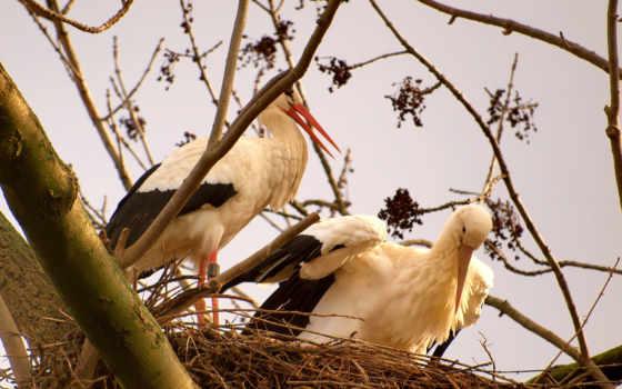 white, stork, williams