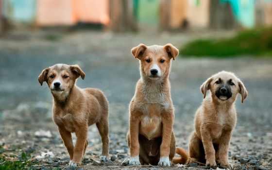 три щенка