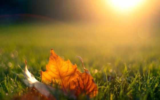 leaf, природа