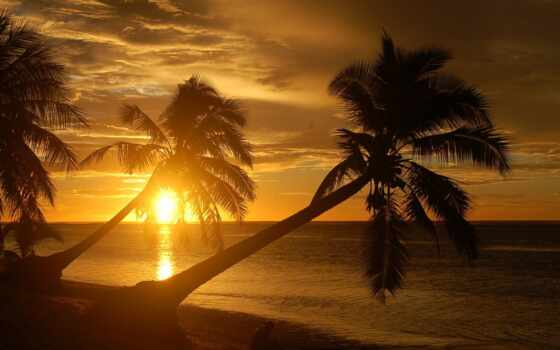 пальмы, пляж, природа