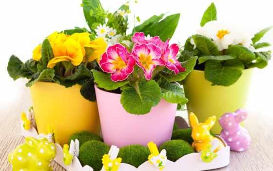 cvety, растения, горшке