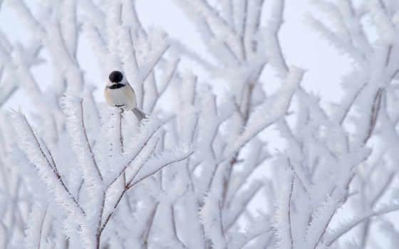 winter, птица, фон