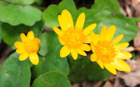 макро, makro, цветы