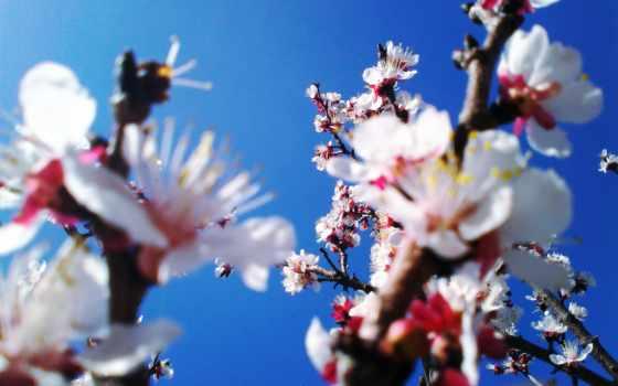 природа, цветы, фоны