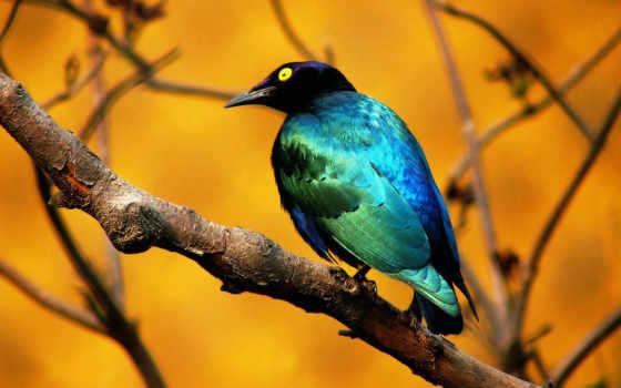 pájaro, azul, pantalla