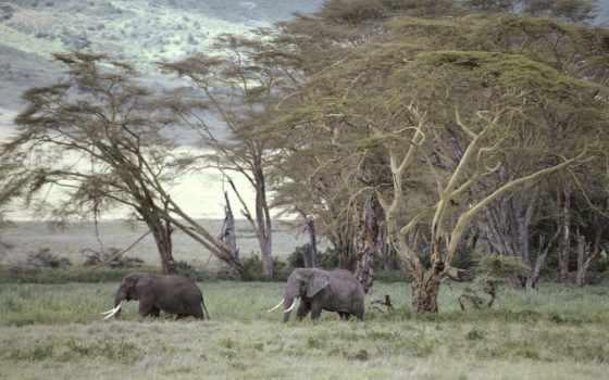 африка, african, id, warriors, sfondi, andile,