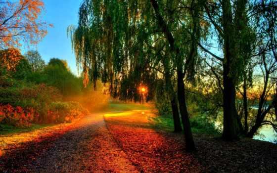 осень, лес, trees Фон № 158863 разрешение 1920x1200